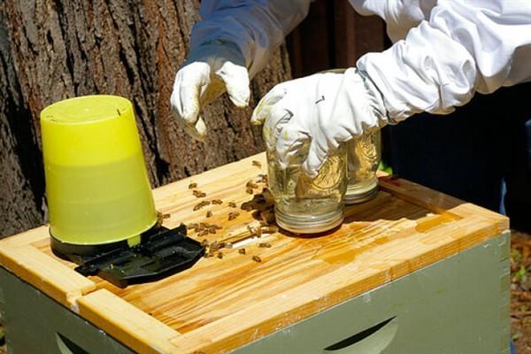 Подкормка пчел осенью сахарным сиропом сроки