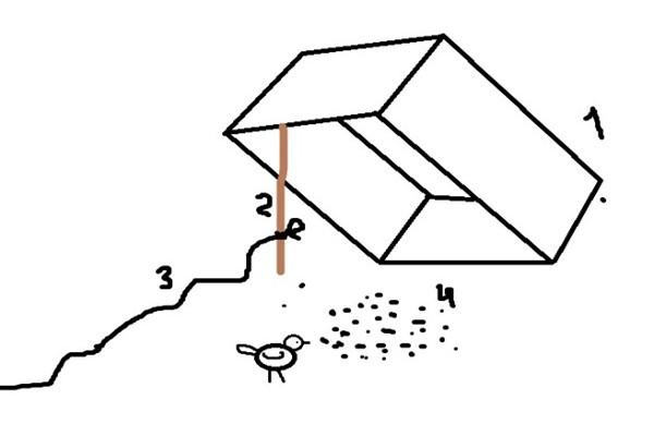 Поймать голубя ловушкой