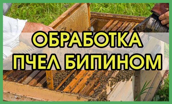 Обрабатывание пчел Бипином