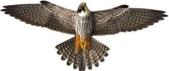 Отпугиватель голубей хищник 3