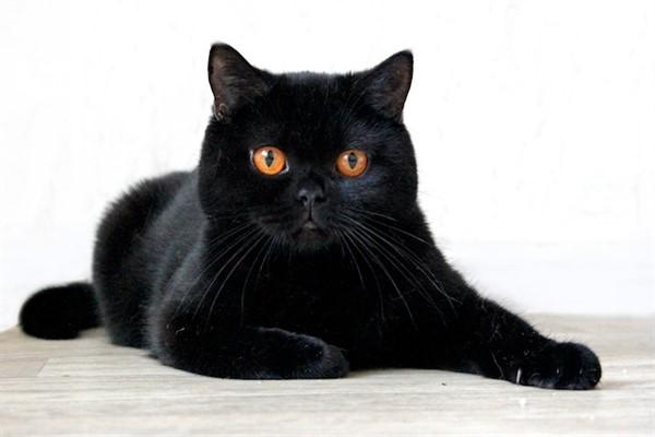 Черная шерстка