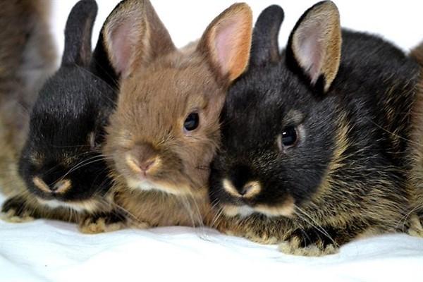 Жизнь кроликов длительность жизни кроликов
