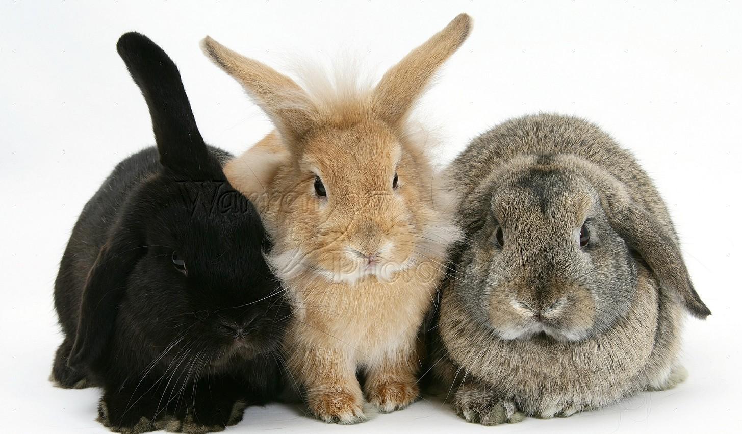 Кроли