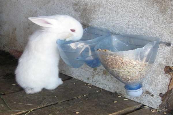 Кормление и поение кроликов из пластиковых бутылок