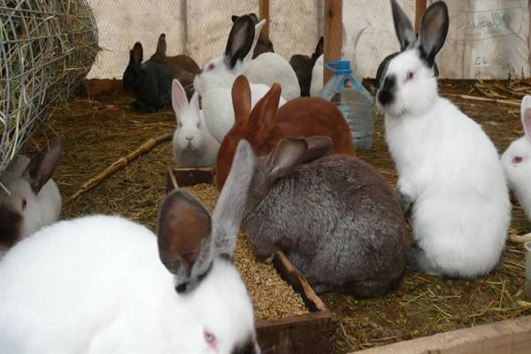Злаковые для кроликов