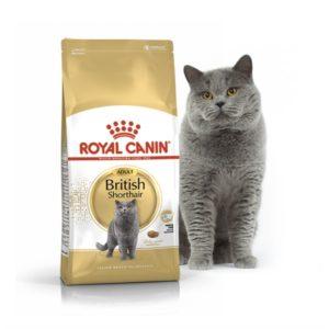 Британская кошка, какое питание