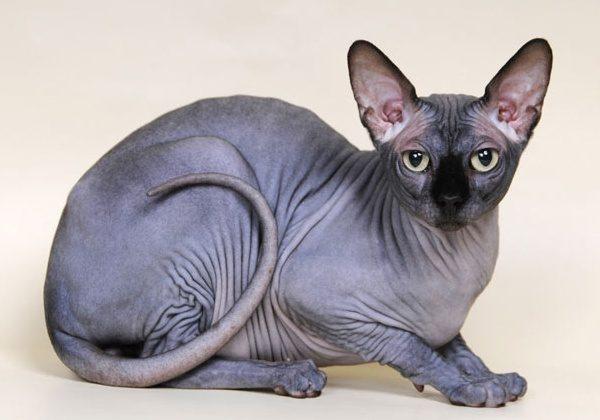 Вид кошки