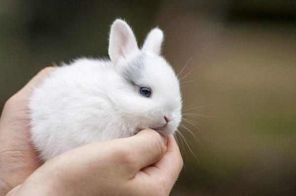 Даем имя кролику