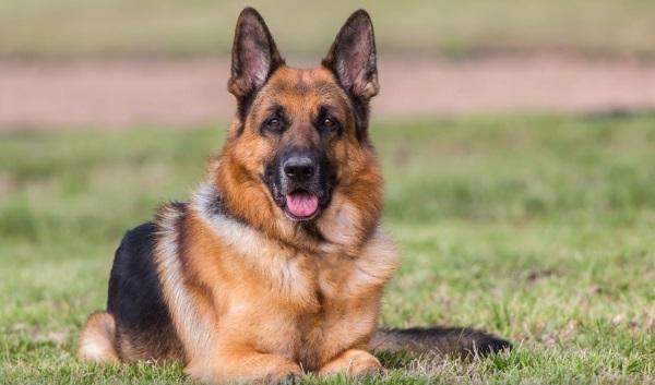 Виды пород собак