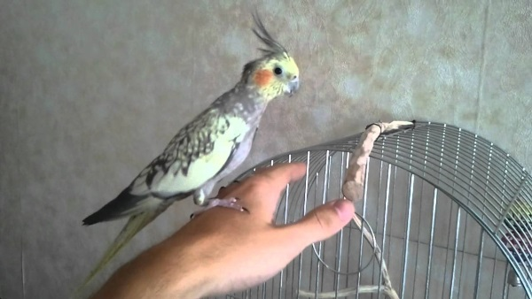 В гостях у попугая
