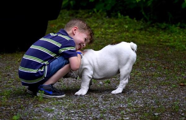 Бульдог и ребенок