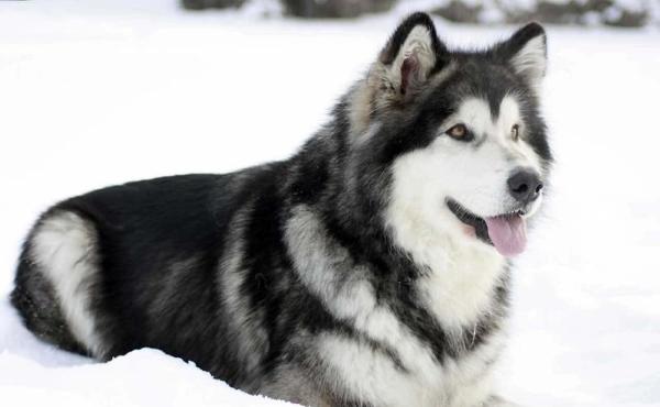 Большой размер собаки