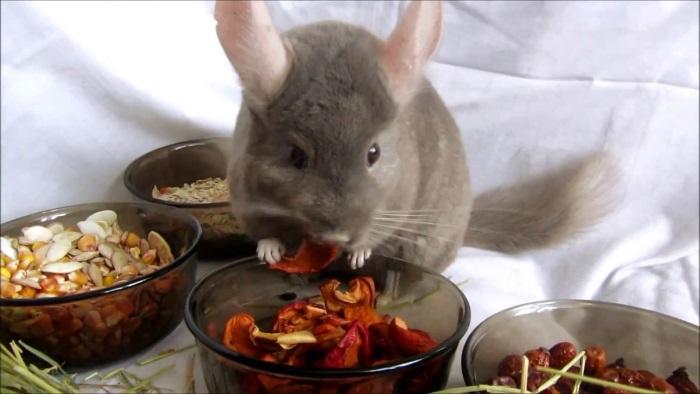 Чем кормить шиншиллу в домашних условиях: чем можно и чем нельзя - Zverki.Click