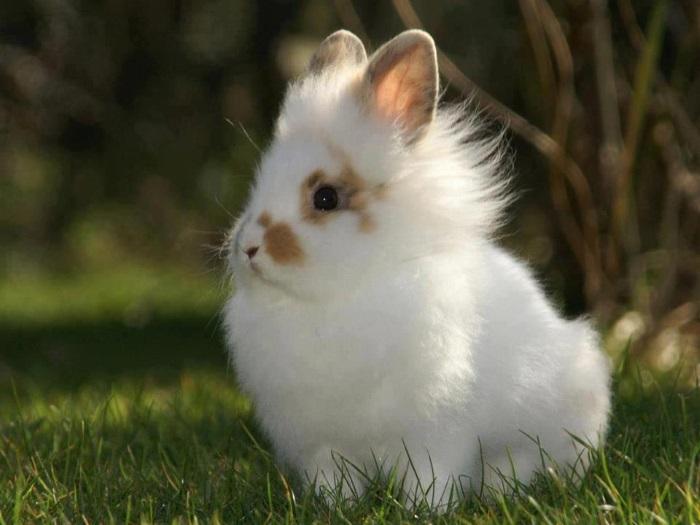 Блохи у декоративных кроликов что делать