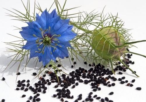 Черные мелкие семена