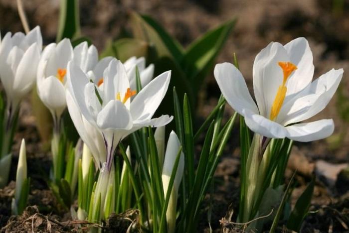 Ранней весной