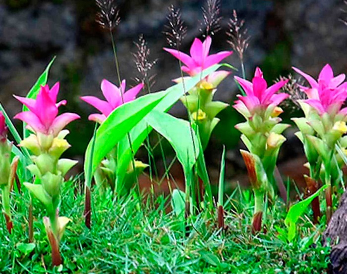 Ароматическое и травянистое