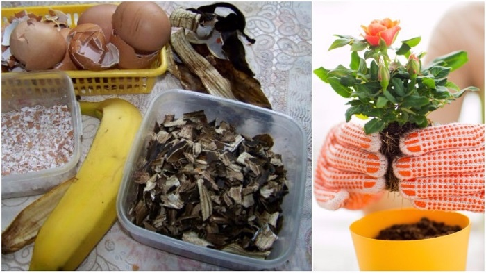 Приготовить домашнюю из пищевых остатков