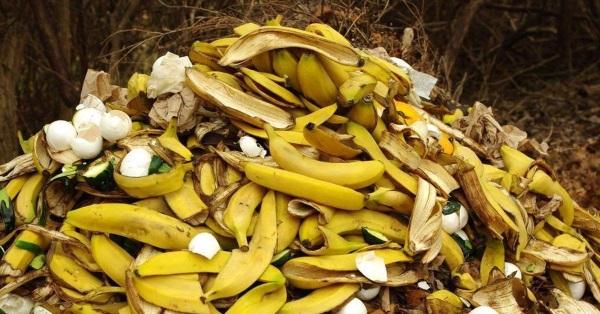 Банановую кожуру необходимо высушить