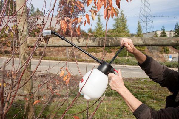 Обработка садовых деревьев