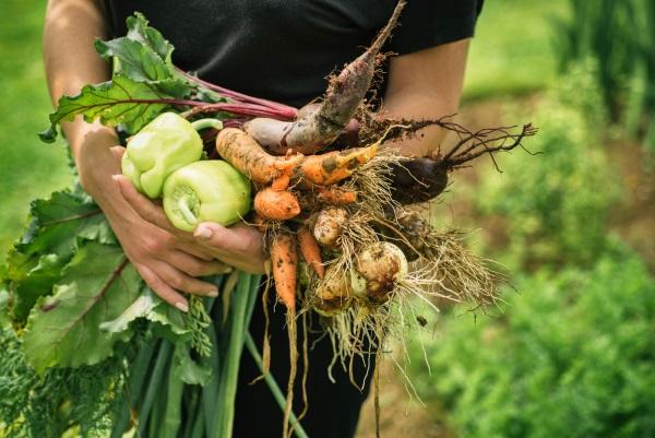 Органика улучшает качество неплодородного грунта