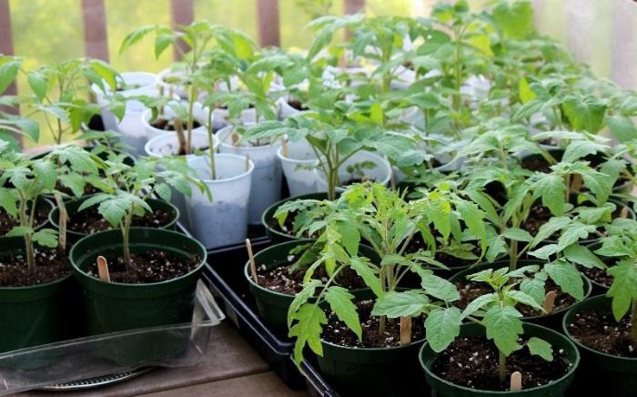В период вегетации