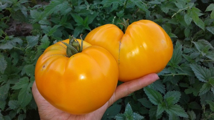 Этот подвид с насыщенно-оранжевой мякотью
