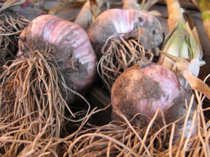 Признаки созревания урожая