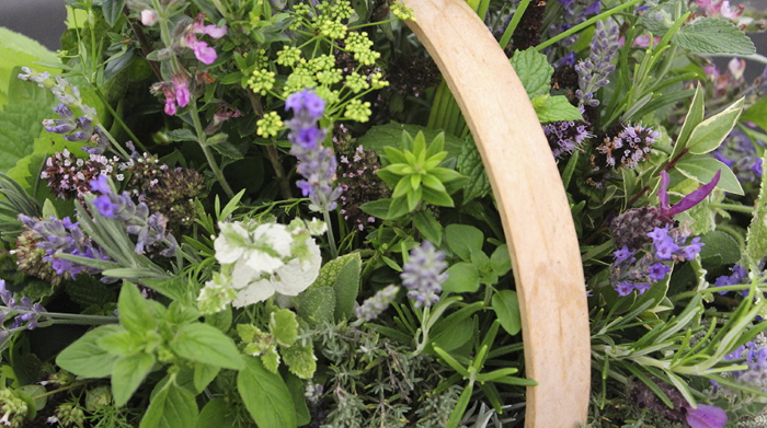 Высадка растений с резким и терпким запахом