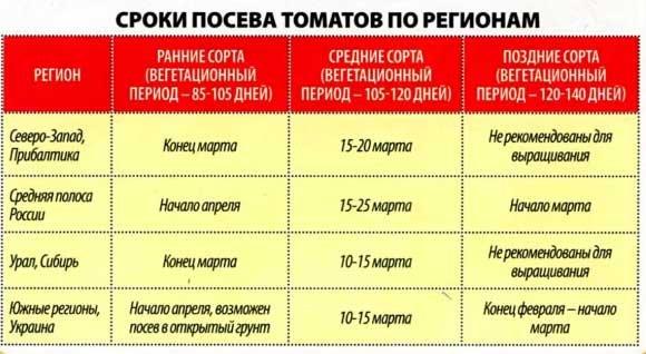 Сроки посева семян помидоров